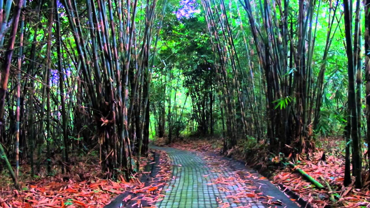 Hutan Bambu di Bangli